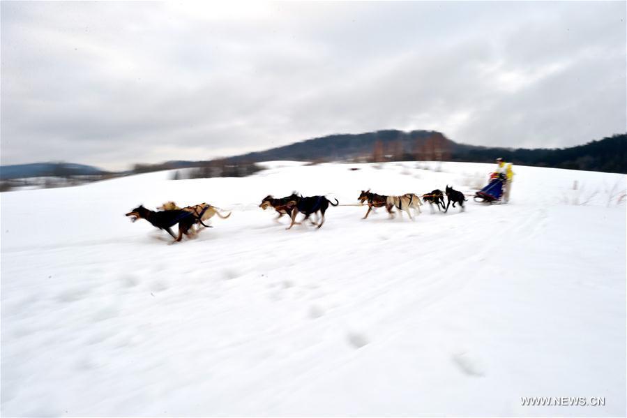 [2](外代二线)狗拉雪橇赛