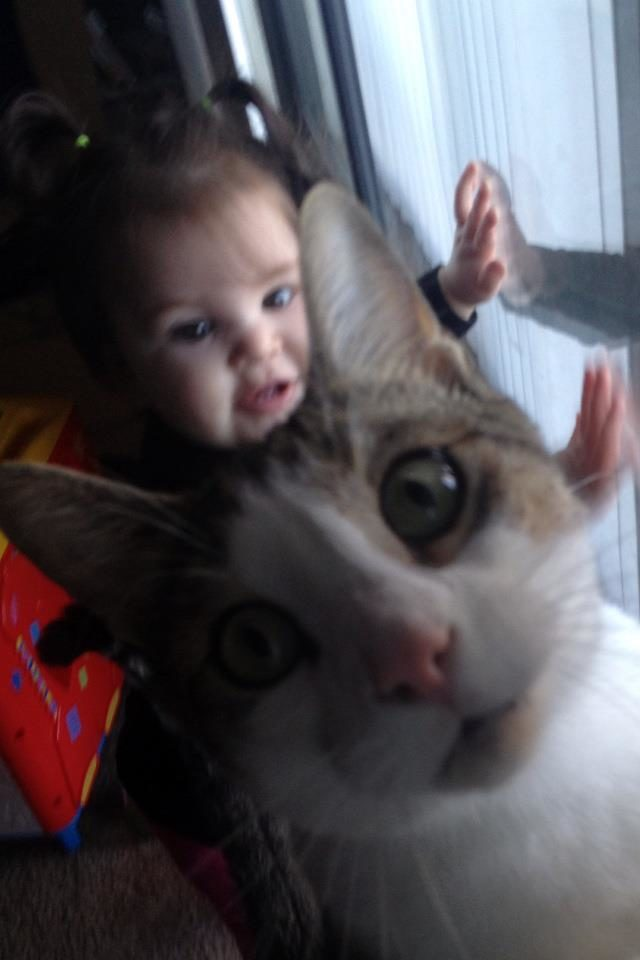 10 Cat Photobombs That Are So Awesome, They Could Make The World Go Round