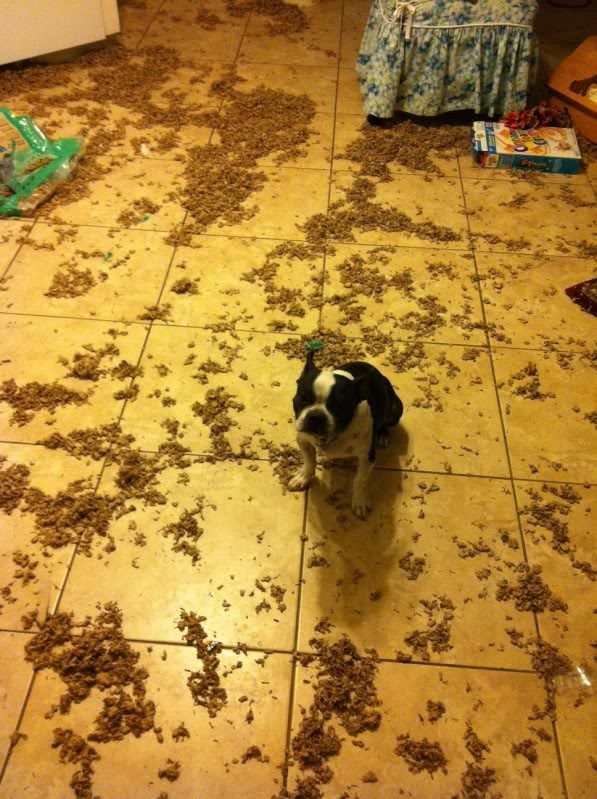 Guilty Pets Who Had Absolutely No Idea You'd Be Home So Soon...