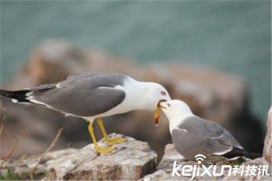 全球10大灭绝动物 百慕大海燕震惊世界