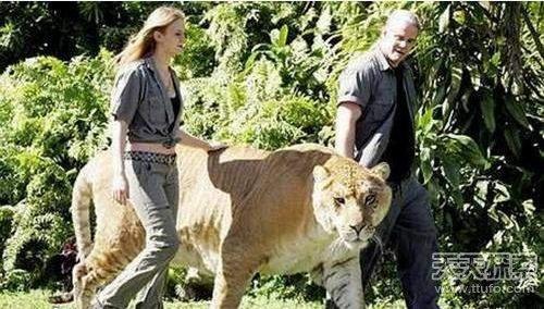 世界上十五只最大的巨无霸动物