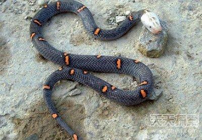 世界上致命动物:最毒蛇类竟在中国(3)