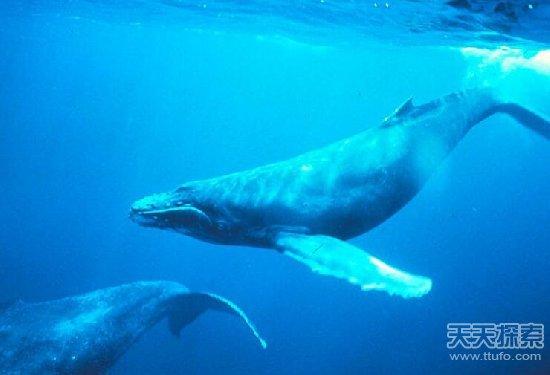 壁纸 动物 海洋动物 鲸鱼 桌面 550_375