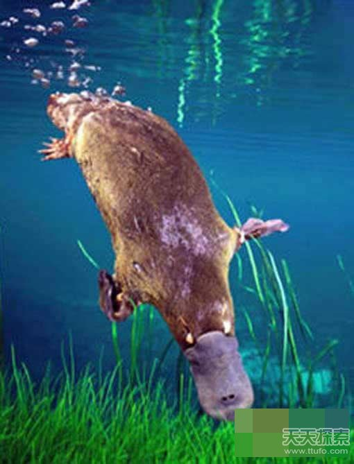 """动物界远古时代真实存在的十大""""怪兽""""(2)"""