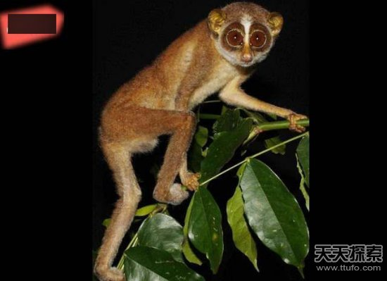 地球上将要消失的20种奇特动物:你见过几个(3)