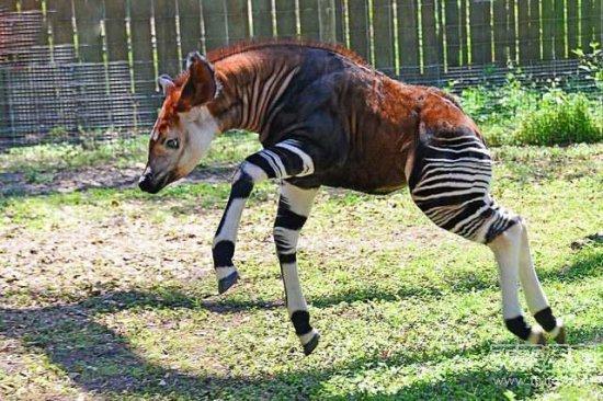 地球上将要消失的20种奇特动物:你见过几个