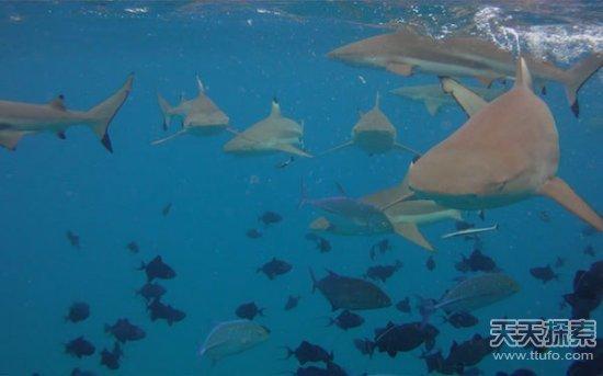 壁纸 动物 海底 海底世界 海洋馆 水族馆 鱼 鱼类 桌面 550_343