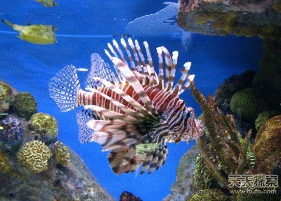 壁纸 海底 海底世界 海洋馆 水族馆 550_395