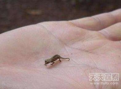 世界上最小的几样东西 看后让人匪夷所思(5)