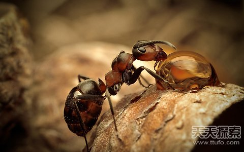 """动物能自疗?蚂蚁竟能给自己""""治病"""""""