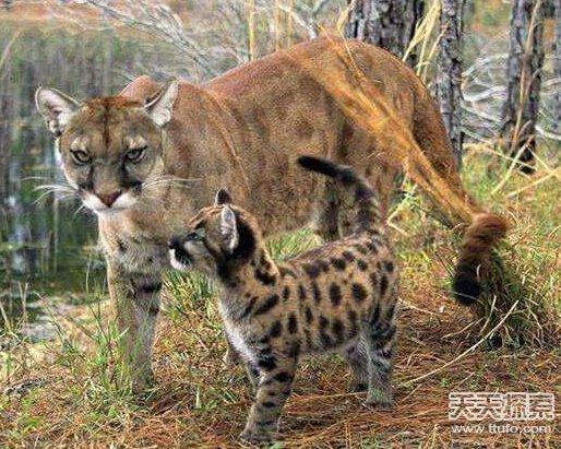 世界最稀有动物排行 角竟然是螺丝状的(2)