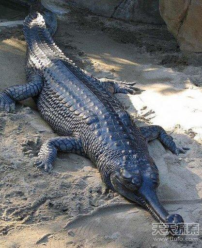 世界最稀有动物排行 角竟然是螺丝状的(10)