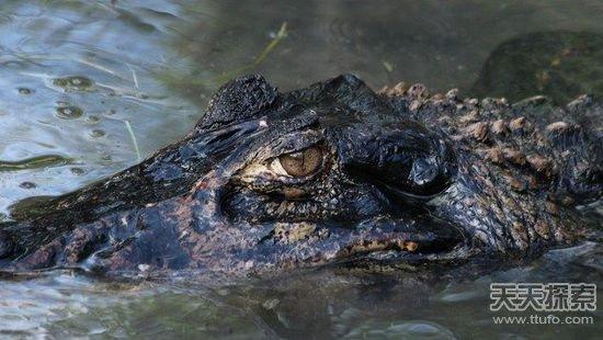 小心这些可怕的动物!亚马逊河的死亡猎手