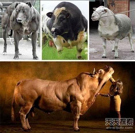 """动物界的""""肌肉男"""""""