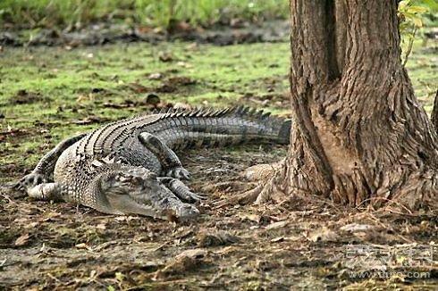 世界十大最致命动物 第一你绝对想不到(3)