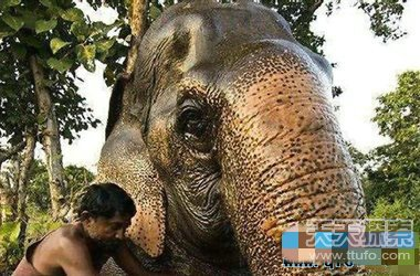世界寿命最长的动物 原来最长寿命竟是他(2)