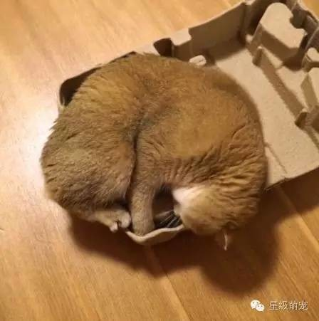 diy纸箱动物衣服图片