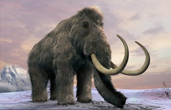 灭绝动物的最后影像