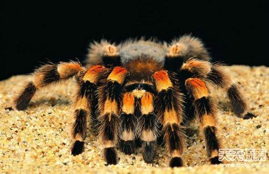 揭秘世界十大恐怖动物排行榜(2)