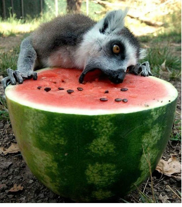 Funny and cute! Lovely appearance of animals