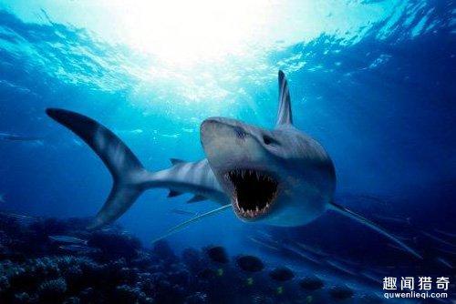 深海的海洋脊椎动物