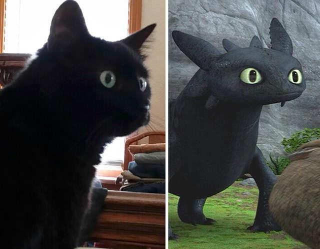 不过国外某网友就把自家的黑猫当做了没牙仔,我们就一起来看看吧.