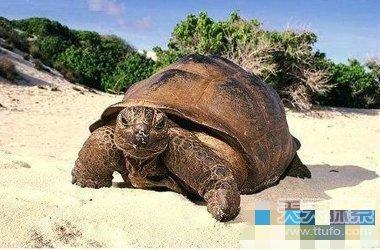 世界寿命最长的动物 原来最长寿命竟是他(1)