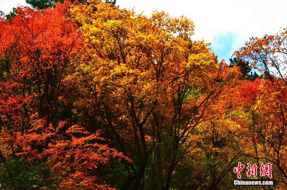 Picturesque autumn scenery in SW China's Sichuan Province