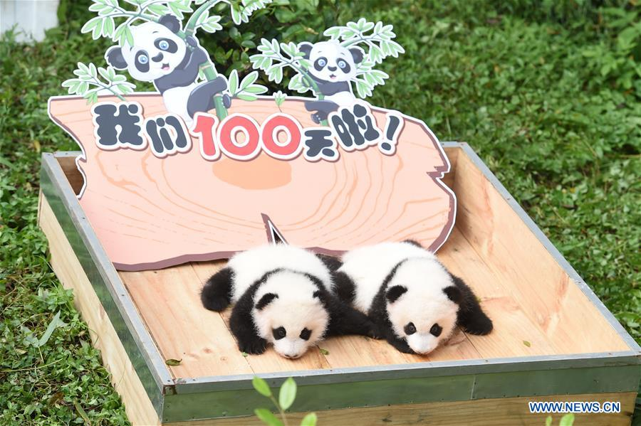 CHINA-CHONGQING-PANDA CUBS-100-DAY CELEBRATION (CN)