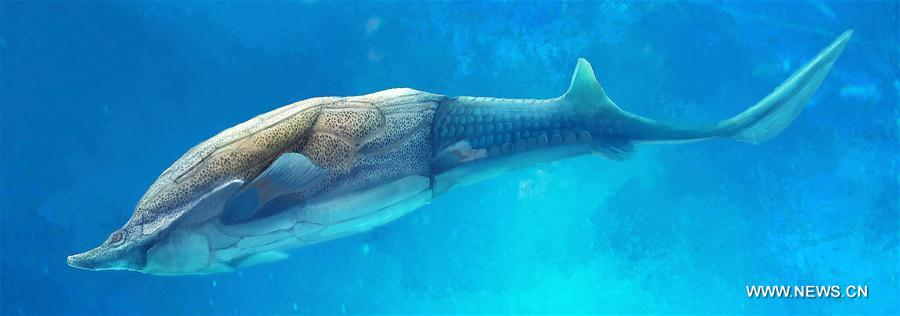 China fish fossil reveals where our jaws come from