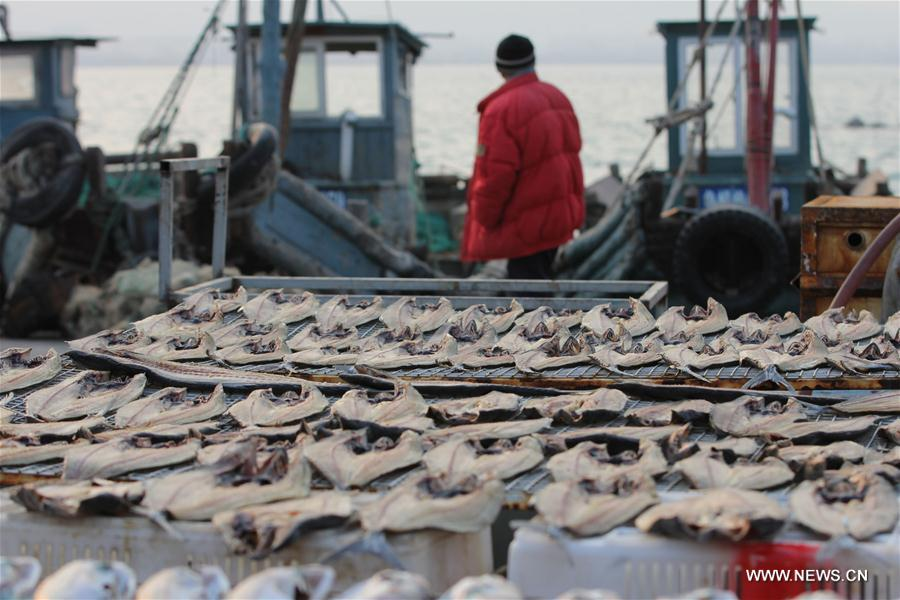 Photo taken on Nov. 30, 2016 shows the dried fish at Gangdong Port in Qingdao City, east China's Shandong Province.