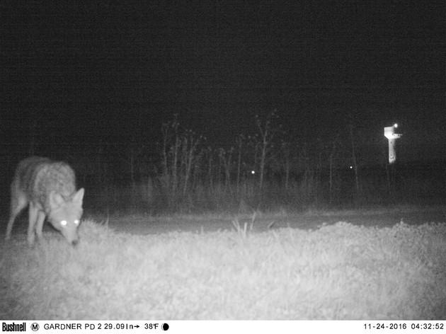 神奇动物在这里!追寻美洲狮的摄像头拍的猛兽太惊悚