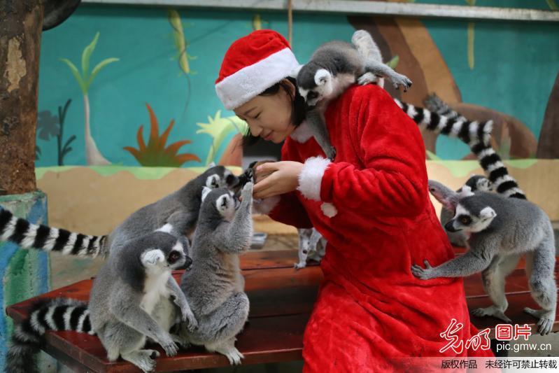 """""""圣诞老人""""为野生动物送美食礼物"""