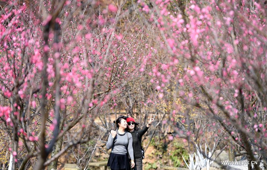 Tourists view plum blossoms at Taiyanggu scenic spot in Nanchang, capital of east China's Jiangxi Province, Feb. 16, 2017. (Xinhua/Wan Xiang)