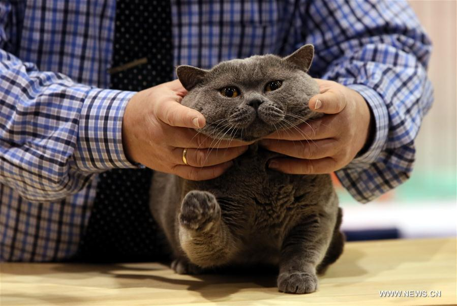More than 300 cats were displayed in the competition of the cat show on Saturday