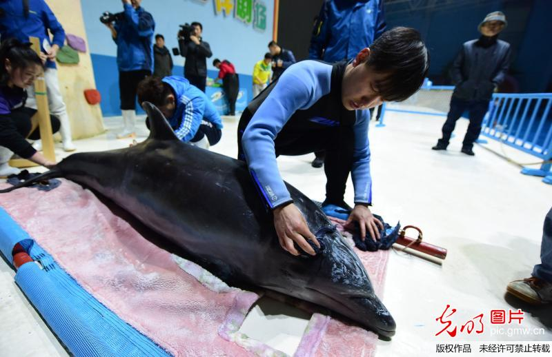10 Bottle-nosed dolphins from Japan settle down in Penglai, E China