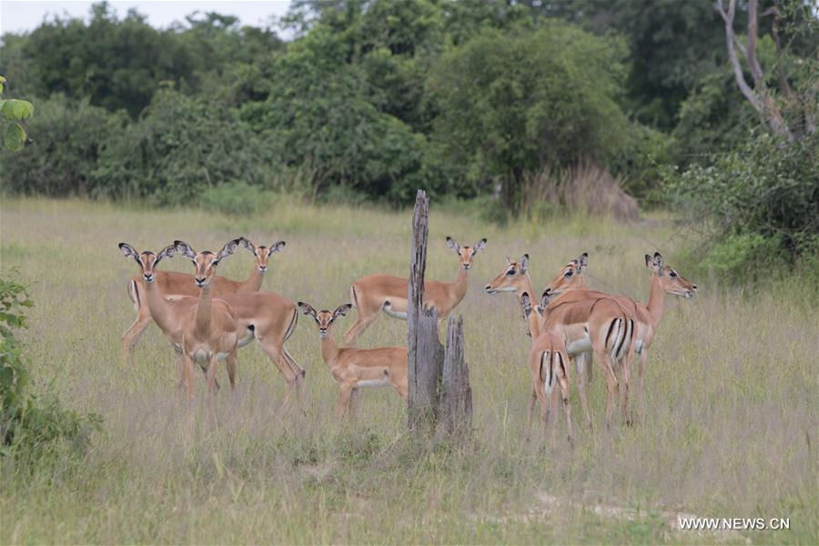 ZAMBIA-MAMBWE-WILDLIFE
