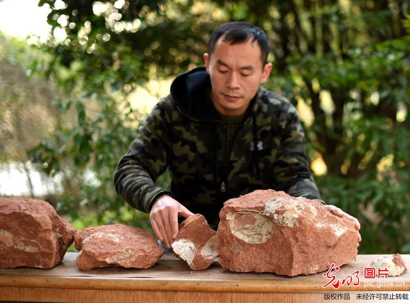 100-million-year old dinosaur egg fossils found in Yiwu, E China's Zhejiang