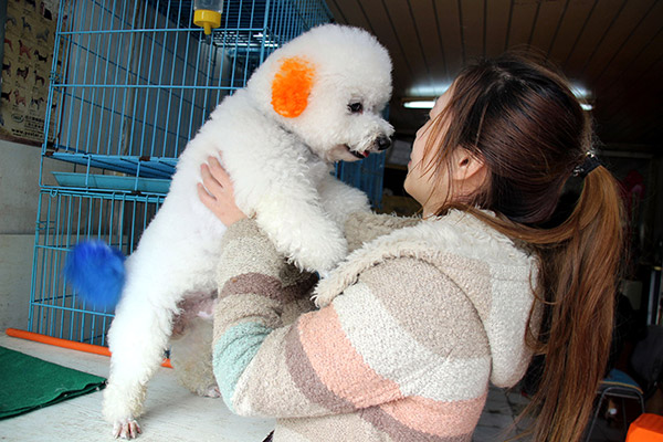 Poodle care proves to be perilously expensive proposition