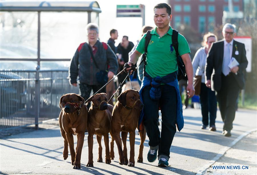 BRITAIN-BIRMINGHAM-CRUFTS DOG SHOW