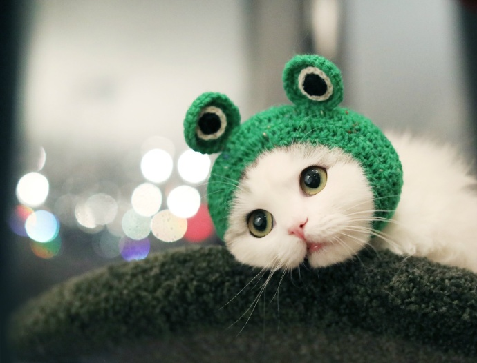 My new headwear makes me a cuter kitten