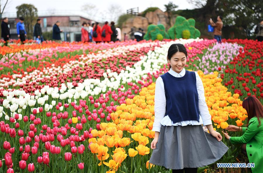 A woman poses for a photo in front of blooming tulips at Changshouhu scenic spot in Chongqing, southwest China, March 16, 2017. (Xinhua/Wang Quanchao)