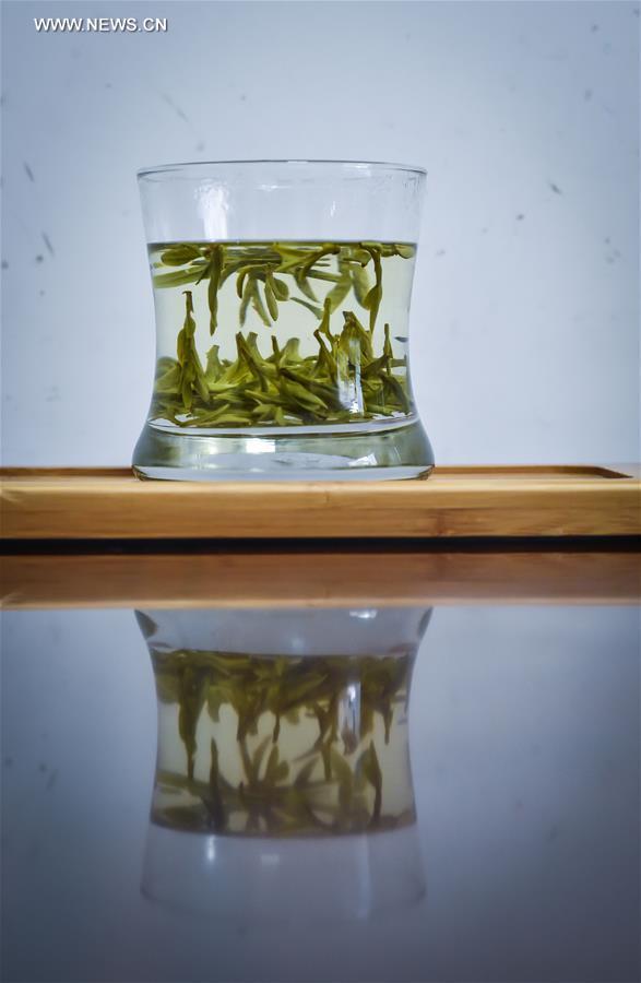 CHINA-ZHEJIANG-MINGQIAN TEA-HARVEST (CN)