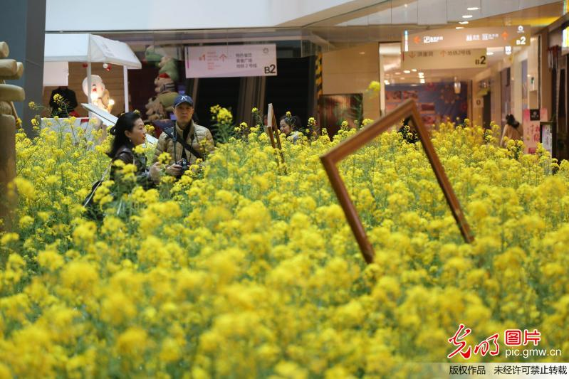 3,000 square meters of rape flowers displayed at mall in SW China's Chongqing