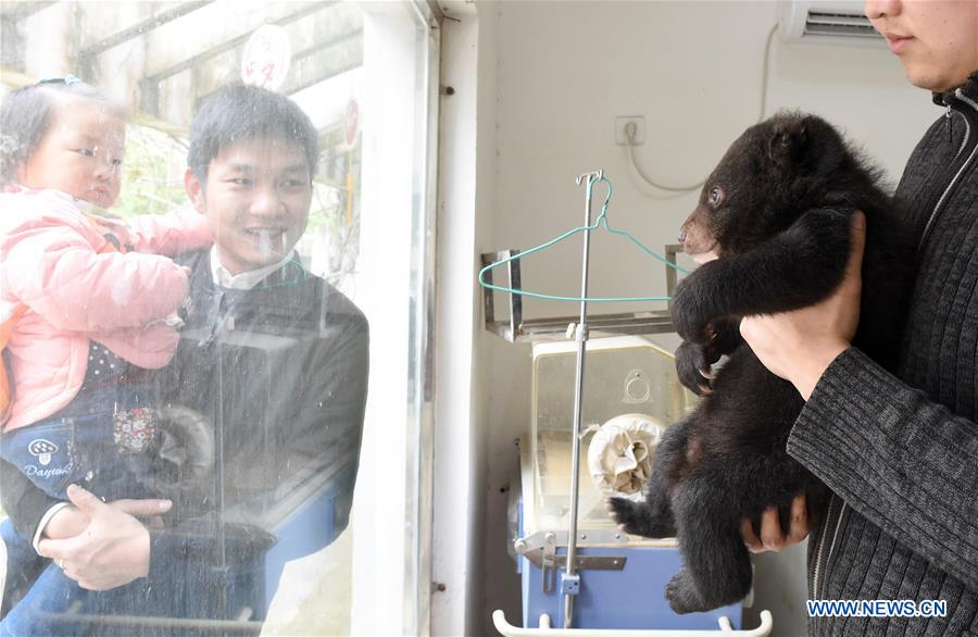 CHINA-ANHUI-HEFEI-BEAR CUBS (CN)