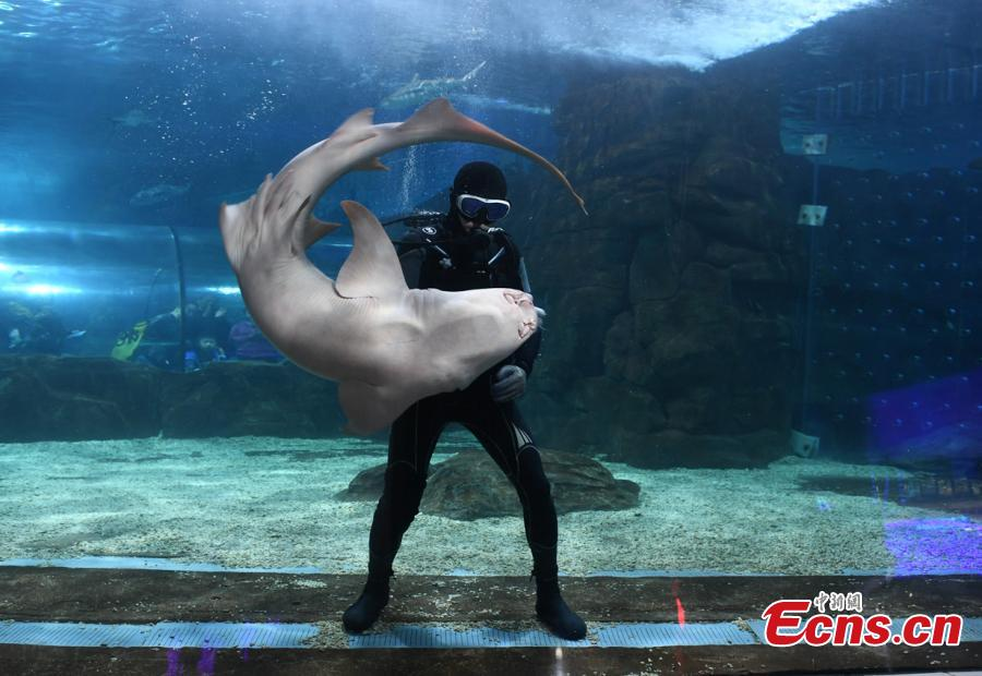Aquarium keeper enjoys dancing with shark