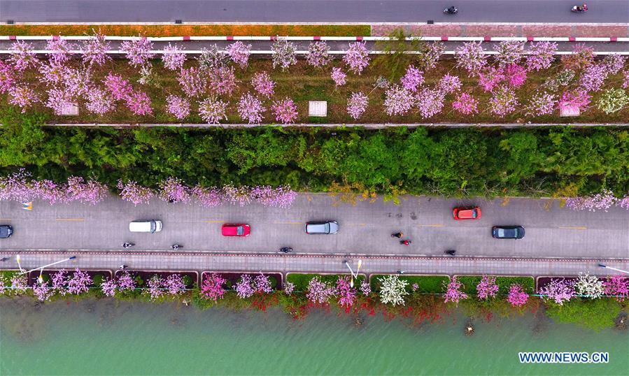 CHINA-GUANGXI-LIUZHOU-ENVIRONMENT (CN)