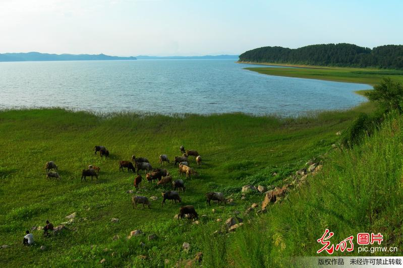 Beautiful scenery of Dahuofang Reservoir in China's Liaoning