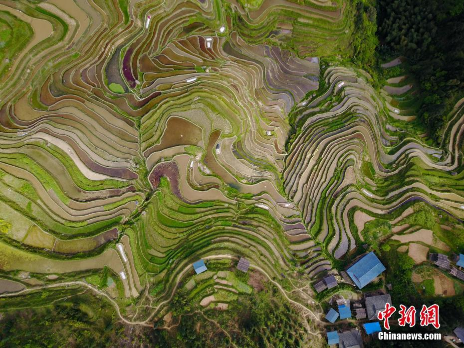 Terraced fields in Guizhou