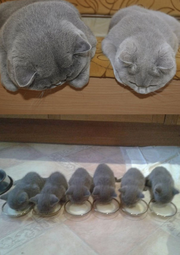 How many kittens are there?